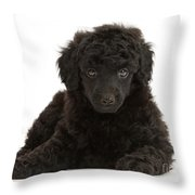 Black Toy Poodle Pup Throw Pillow