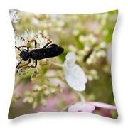 Black Wasp 2 Throw Pillow