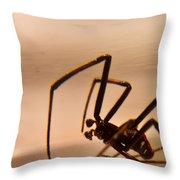 Black Widow Male Throw Pillow by Douglas Barnett