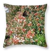 Black With Orange Dots Butterfly Throw Pillow