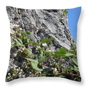 Blackberry On The Rock 04 Throw Pillow