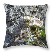 Blackberry On The Rock Square Format Throw Pillow