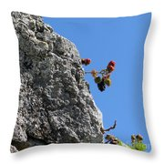 Blackberry On The Rock Top. Square Format Throw Pillow