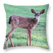 Blacktail Fawn Portrait Throw Pillow