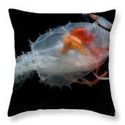Blind Lobster Throw Pillow