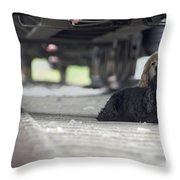 Blonde And Black Dogs Throw Pillow