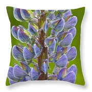 Blooming Lupine Throw Pillow by Sean Griffin