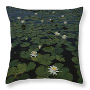 Blooming Water Lilies Fill A Body Throw Pillow