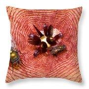 Blowflies On Stapelia Throw Pillow