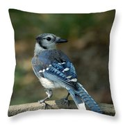 Blu-jay Throw Pillow