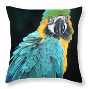 Blue And Gold Macaw Throw Pillow