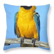 Blue-and-gold Macaw Throw Pillow