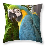 Blue And Yellow Macaw Throw Pillow