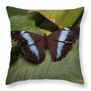 Blue Banded Morpho Throw Pillow