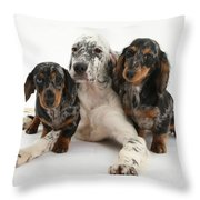 Blue Belton Setter And Dachshund Pups Throw Pillow