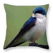 Blue Bird Of Happiness Throw Pillow
