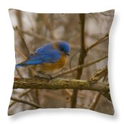 Blue Bird Perched On Willow Throw Pillow