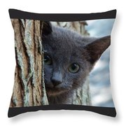 Russian Blue,cat  Throw Pillow