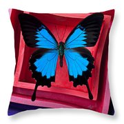 Blue Butterfly In Pink Box Throw Pillow