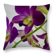 Blue Charm X Aridang Blue Orchid - 3 Throw Pillow