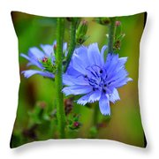 Blue Chicory Flower Throw Pillow