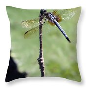 Blue Dasher Dragonfly Dancer Throw Pillow by Sabrina L Ryan