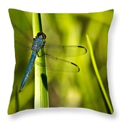 Blue Dragonfly 1 Throw Pillow