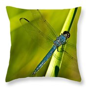 Blue Dragonfly 10 Throw Pillow