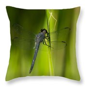 Blue Dragonfly 12 Throw Pillow