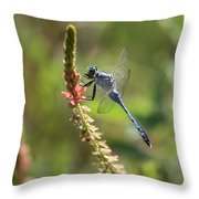 Blue Dragonfly On Pink Flower Throw Pillow