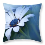 Blue Eyed African Daisy Throw Pillow
