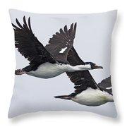 Blue-eyed Cormorant Phalacrocorax Throw Pillow