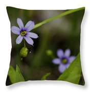 Blue Eyed Grass Throw Pillow