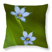 Blue-eyed Grass Wildflower - Sisyrinchium Angustifolium Throw Pillow