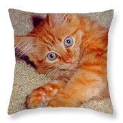 Blue-eyed Kitty Throw Pillow