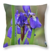Blue Flag Iris - Dsc03987 Throw Pillow