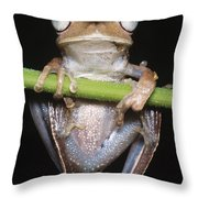 Blue-flanked Tree Frog Throw Pillow