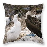 Blue-footed Booby Mother And Chick Throw Pillow