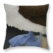 Blue-footed Booby Sula Nebouxii Throw Pillow by Pete Oxford