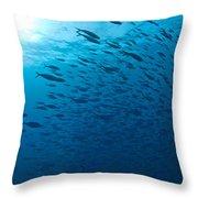 Blue Fusiliers, Similan National Marine Throw Pillow