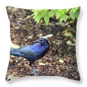 Blue Grackle Throw Pillow