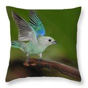 Blue-gray Tanager Throw Pillow