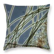 Blue-green Algae Throw Pillow