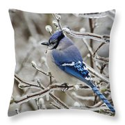 Blue Jay - D003568 Throw Pillow