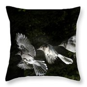 Blue Jay In Flight Throw Pillow