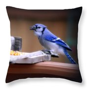 Blue Jay On Backyard Feeder Throw Pillow