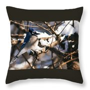 Blue Jay Staying Warm Throw Pillow