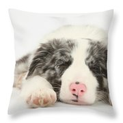 Blue Merle Border Collie Pup Throw Pillow