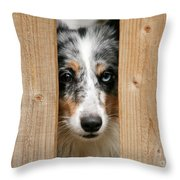 Blue Merle Sheltie Throw Pillow by Kati Molin