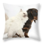 Blue-point Kitten And Dachshund Pup Throw Pillow